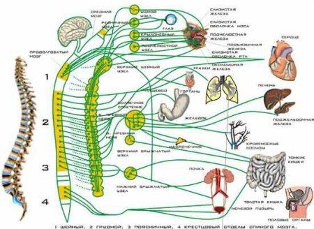 Курс по йогатерапии